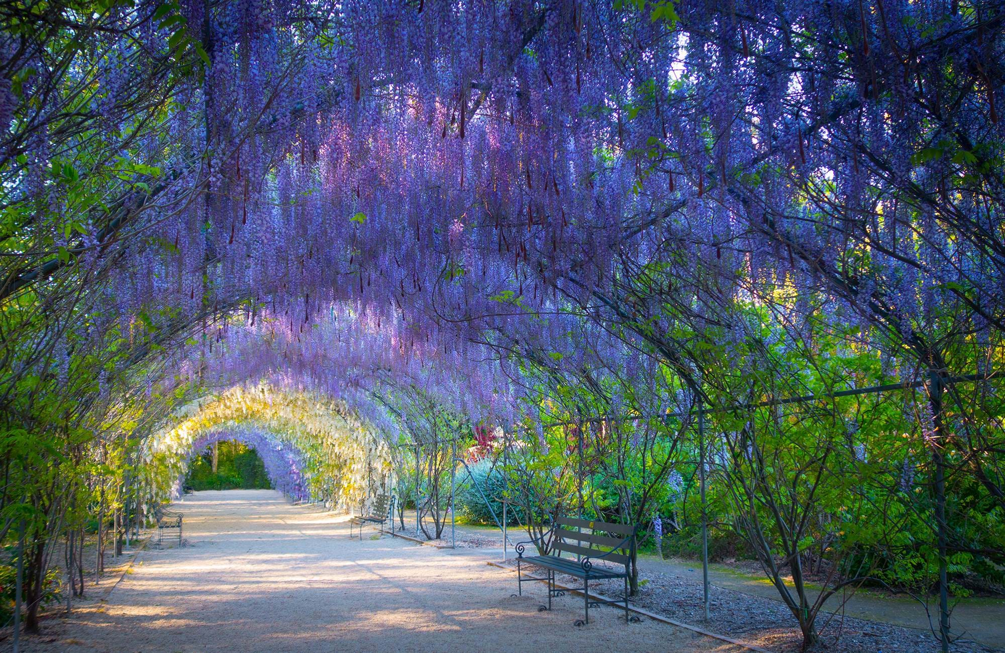 visit the botanical gardens in adelaide