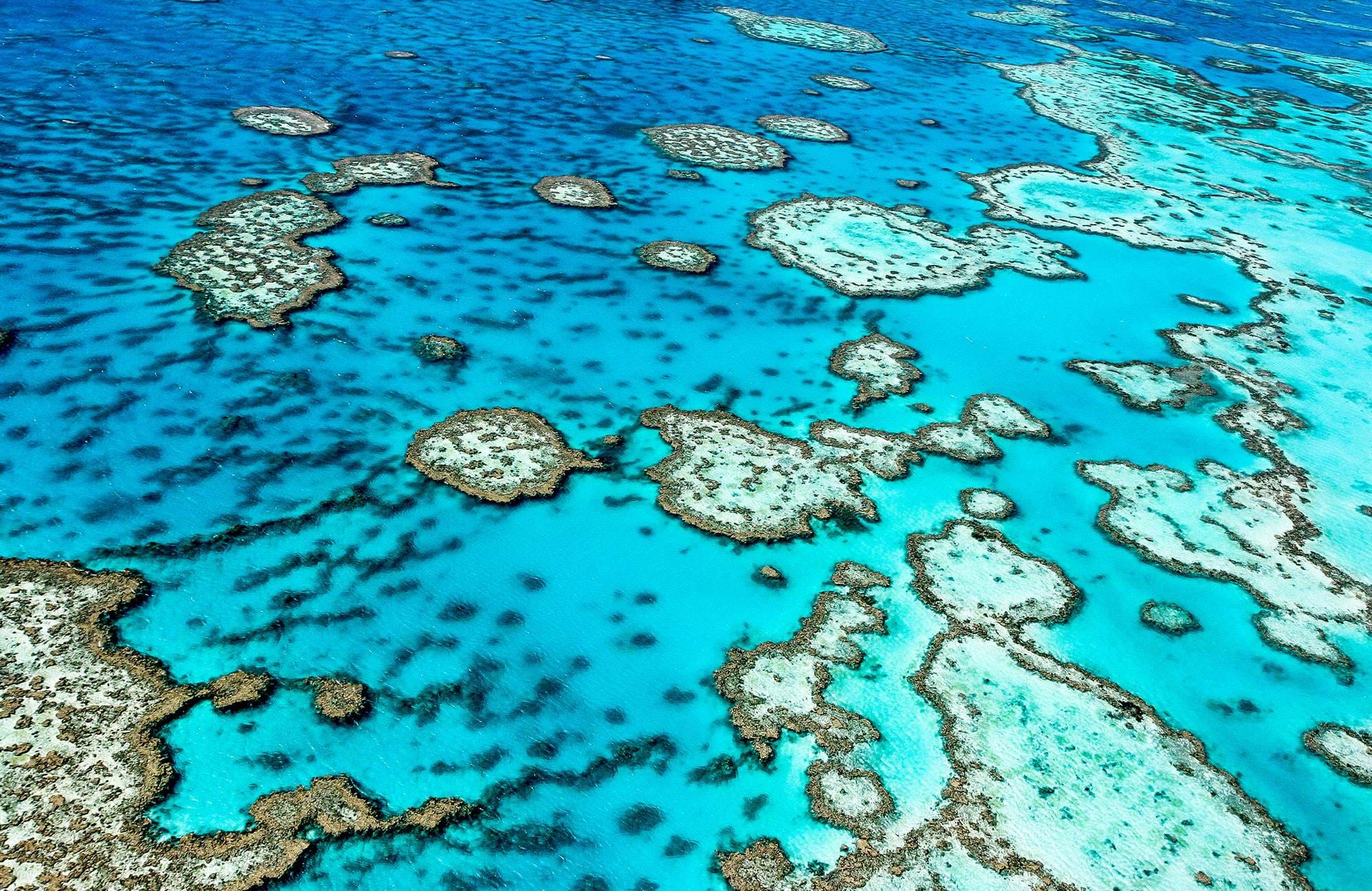 you have to see the Great Barrier Reef during your studies in australia