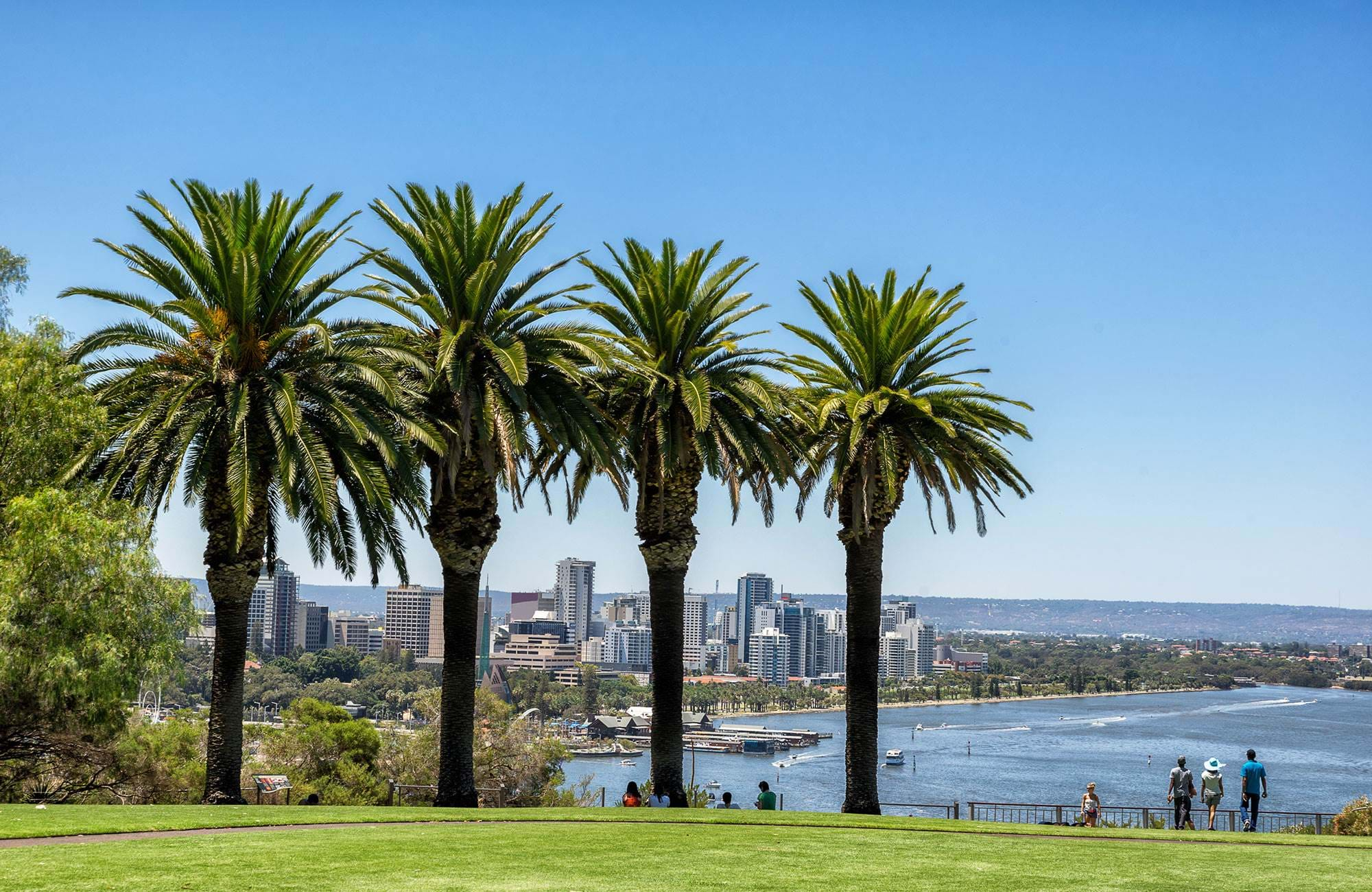 view from kings park over perth in australia and four palm trees