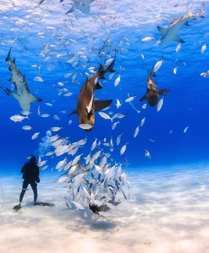 travel to bahamas flights to bahamas kilroy