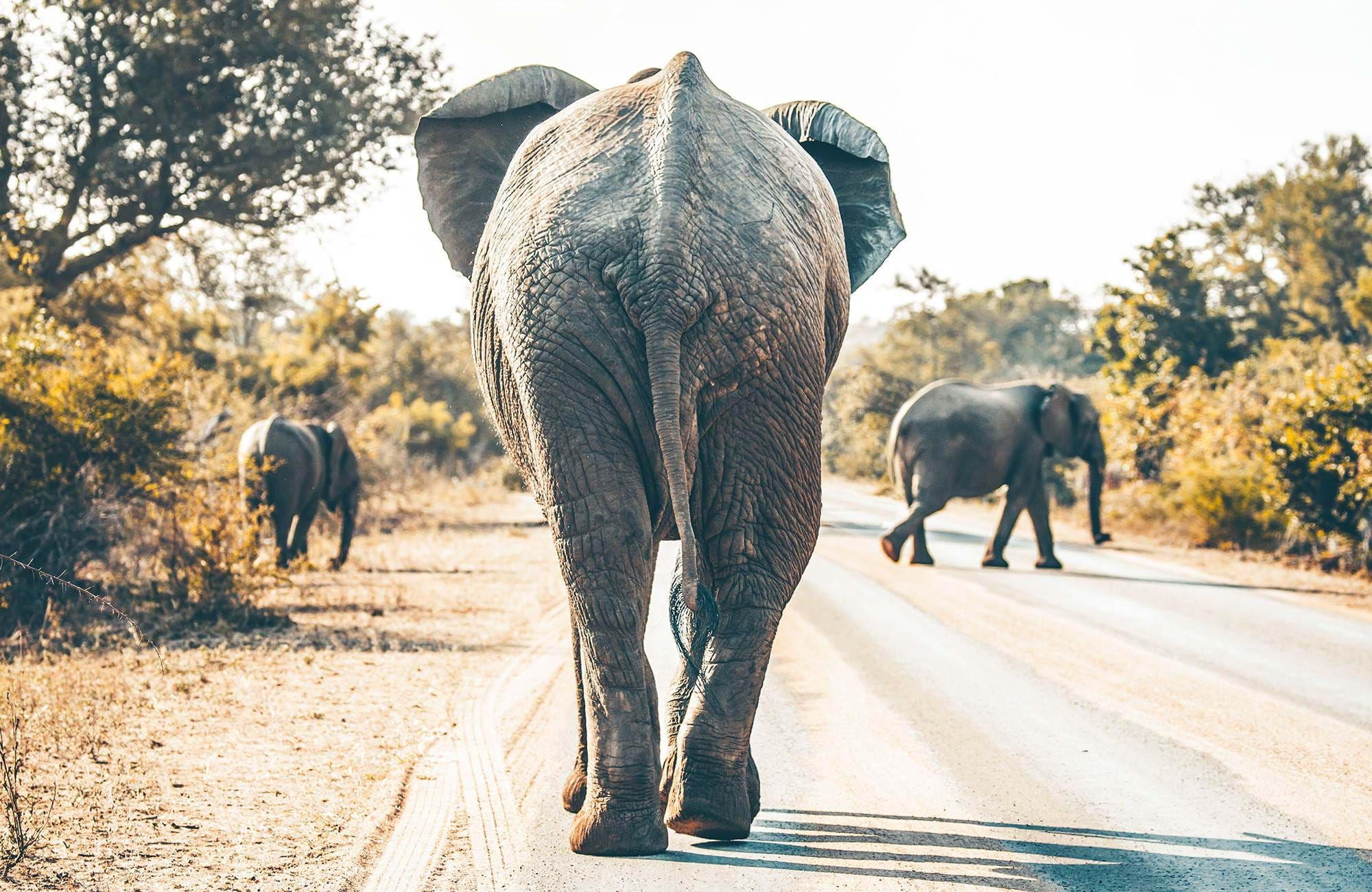 Explore Kruger National Park when in South Africa
