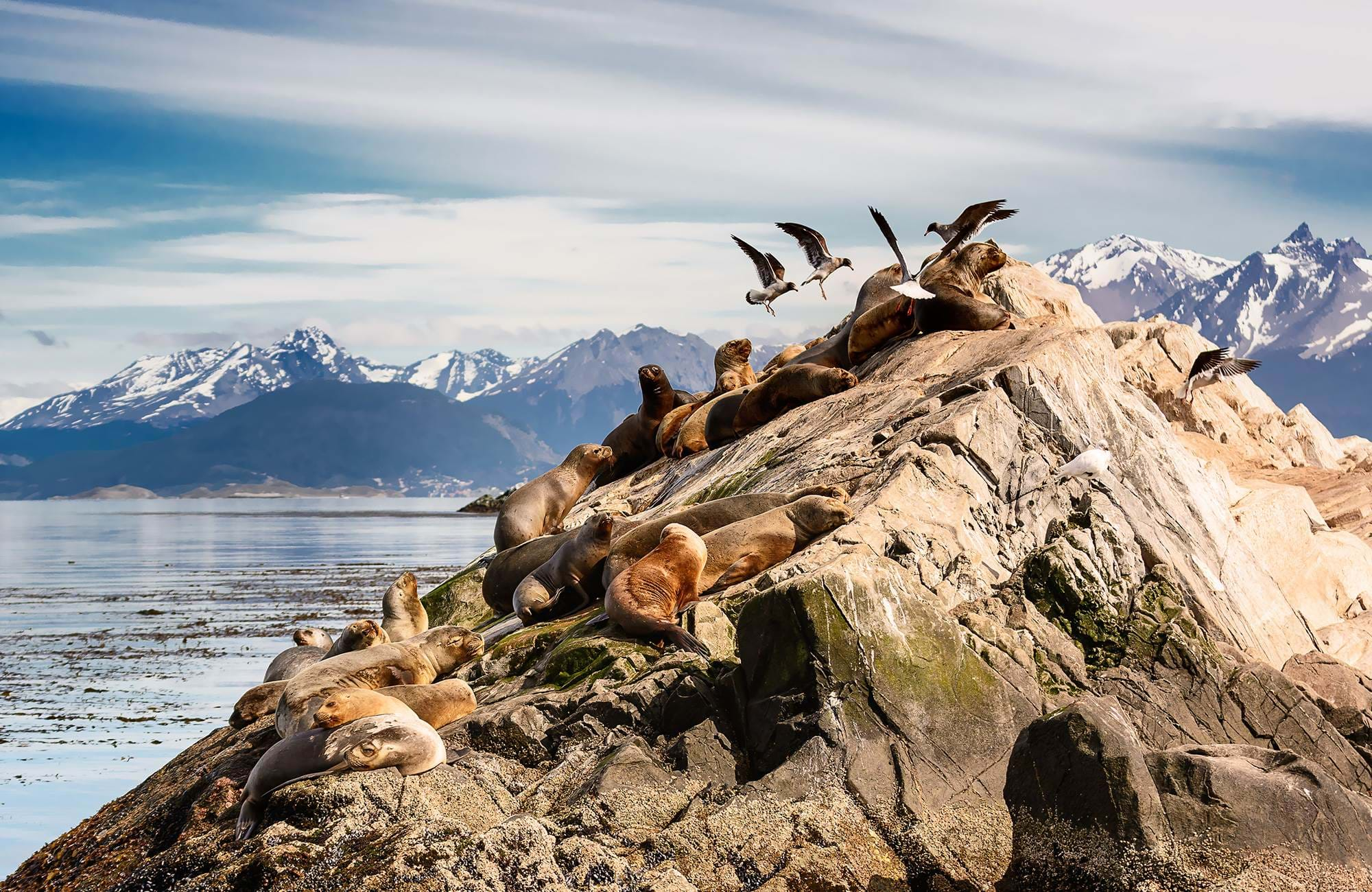 Sea lions playing around on a cliff at Ushuaia, Argentina