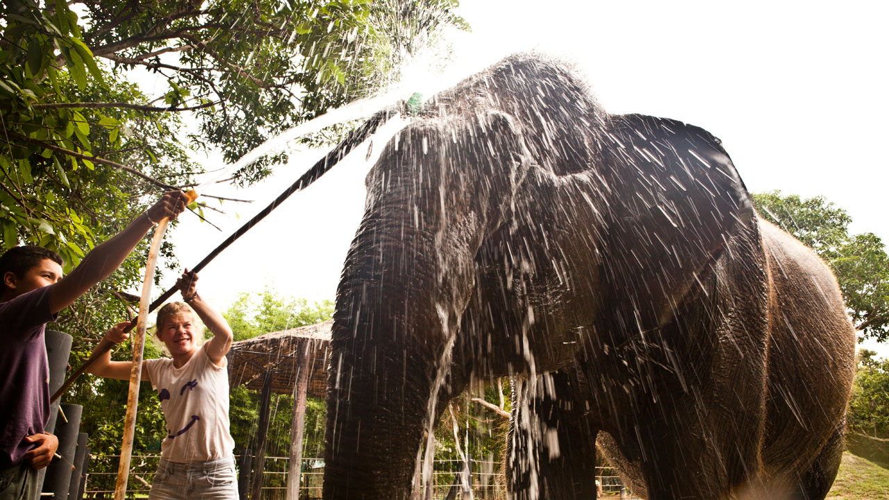 Young people washing an elephant at the refuge center