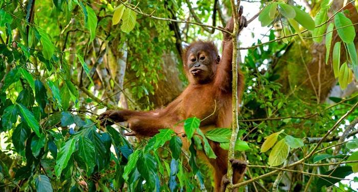 Sumatra offers world class wildlife