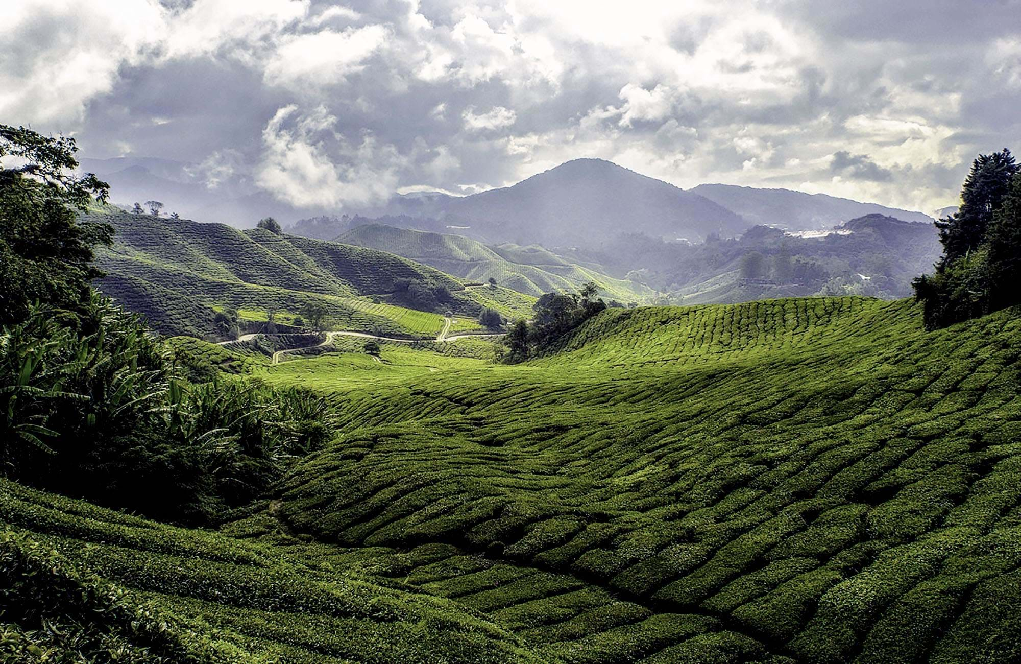 Experience cameron highlands in malaysia