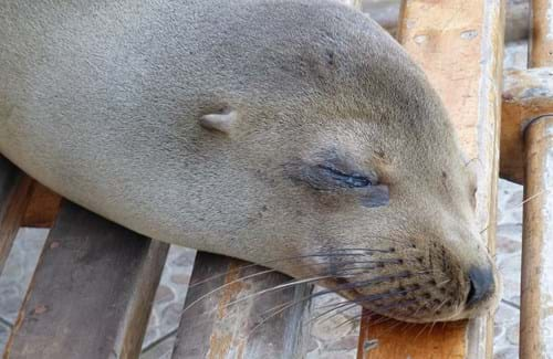 Sea lion sleeping on bench on the Galapagos | Travel with KILROY